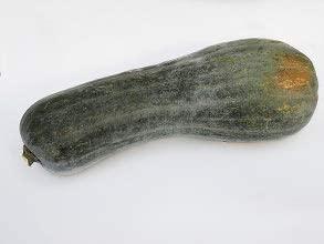 zucca napoletana